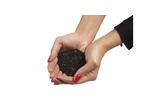 Carbon Adsorbent