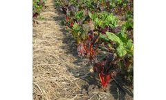 Dynaweed - Pre-emerge Herbicide / Natural Fertilizer