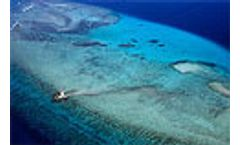 Sunscreen identified as major cause of coral bleaching