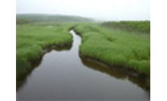 Modifying urban rivers to increase biodiversity