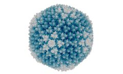 Native - Model Type 3 Particles Wild-type - Highly Purified Human Adenovirus