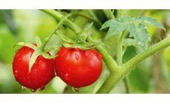 Isagro - Aminogreen Nature Biostimulants