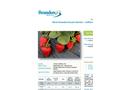 More Strawberries per Hectare - Californian Field Trial  - Crop Trial Bulletin