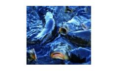 Ultraviolet disinfection systems for the aquaculture industry