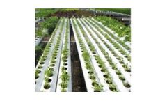 Ultraviolet disinfection systems for the horticulture industry