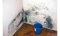 Mold Testing and Mold Inspections