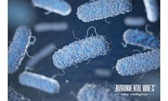 Legionella Elimination
