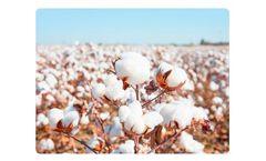 Liquid Organic Fertilizer for Cotton