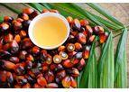 Analytik Jena - Web Seminar: Keeping Edible Oil Safe