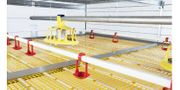 Automatic Broiler Growing System
