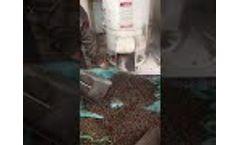 Walnut shell Flat die 450 Pellet Mill Testing Video