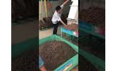 Eucalyptus 560 Pellet Mill Testing Video