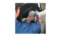 Paintstik - Model HC - Livestock Marker