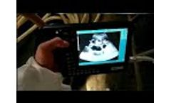 How to perform a afast abdominal ultrasound in a pig/cow/cattle | GF007 Veterinary CE Videos