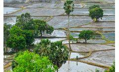 Mekong Delta Faces Saline Intrusion Crisis