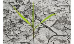 Water Scarcity is Putting Global Food Production at Risk