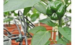 Plantarray Hardware and Software for Effect of Nutrients, Biostimulants & Pesticides