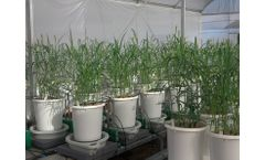 Plantarray Solution for Whole Plant Physiology