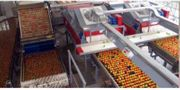 Tomato Sorting Systems