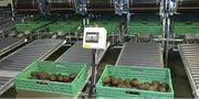 Avocado Sorting System