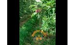 SwarmFarm Apple Flower and Fruitlet Management Video