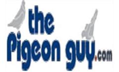 Pigeon Control Services in Phoenix, AZ