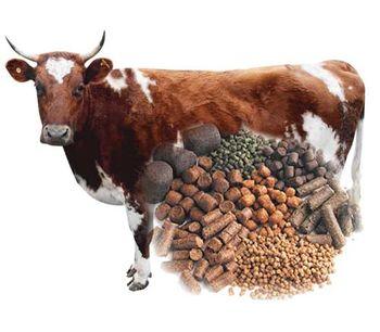 Cattle Pellet Plant-1