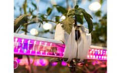 Hortilux - Grow Light Strategy Personal Consulting Service