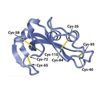 MtoZ Biolabs - disulfide bond analysis