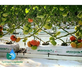 Advantages of Tomato Growing in Hydroponic Systems