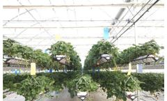 Hydroponic agriculture - Advantages and Disadvantages
