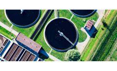 Sewage sludge to phosphorus fertilizer