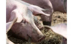 Coal Feed for Naturally Healthy Animals