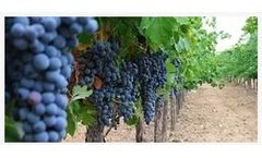 Sustainable sea water desalination solutions for vineyards industry