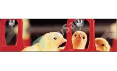 Tavsan - Poultry Nipple Drinker