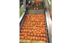 Automatic Orange Peeling Machine