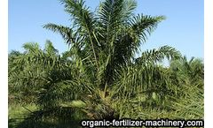 Benefits of applying organic fertilizer to oil palm