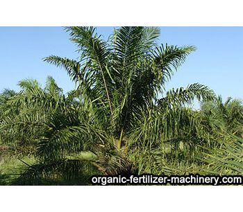 Benefits of applying organic fertilizer to oil palm