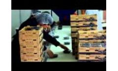 2015 11 new Blueberry Packing Line Video