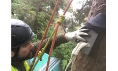 Ground Level and Aerial Tree Inspection