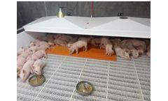 Qingdao - Pigsty Heating Mat