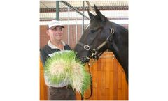 Feeding Sprouts for Equine