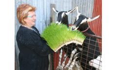 Feeding Solutions for Goats
