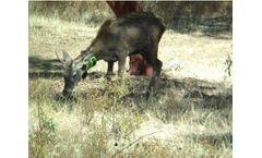 Digitanimal - Wildlife GPS Tracker