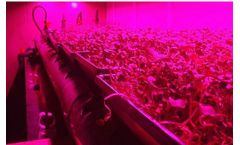 Smart Farmers - Vertical Farming Systems