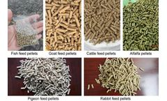 The Requirements Of Feed Processing Machinery In Receiving Raw Materials