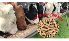 Things You Need To Know About Dairy Cow Feed Pellets Formulations