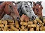 Horse Feed Pellets Analysis