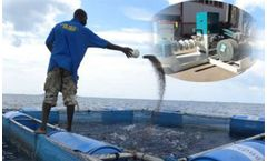How Much Is Fish Feed Pellet Machine In Nigeria?
