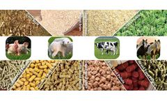 Fusmar - Model Feed Pellet Mill - Why Choose Feed Pellets For Your Poultry